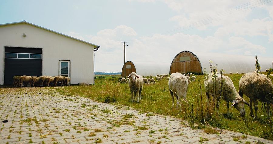 custom made wool sheds